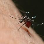 OMS conocía contagio del Zika por vía sexual